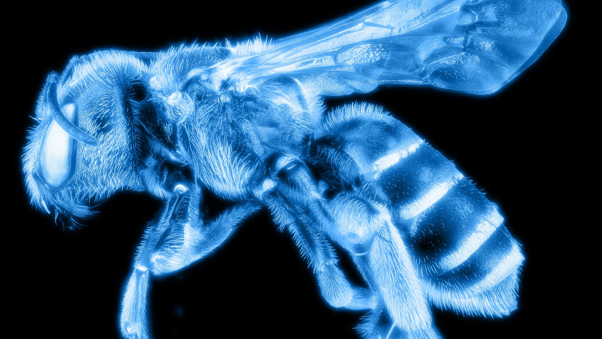 RADIOlogie: Bienen