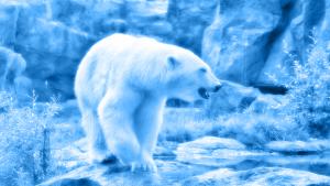 RADIOlogie: Anpassung an den Klimawandel