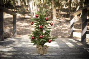 Weihnachten im Prälat-Schleich-Haus