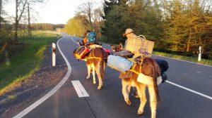 4 Esel – 12 Beine op Jöck