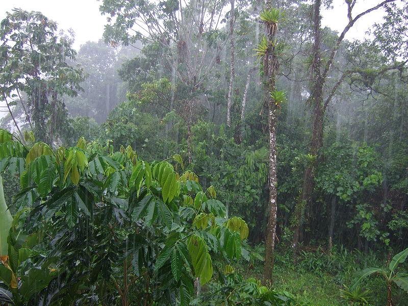 Regen im Tropenwald Equadors
