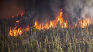 Hilfe, der Wald brennt! Interview mit Waldbrandmanager Alex Held
